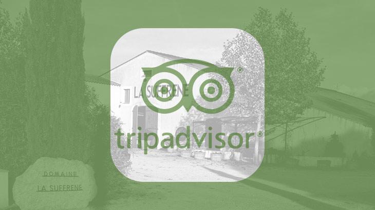 SFFRN_Site_Socials_TripAdvisor